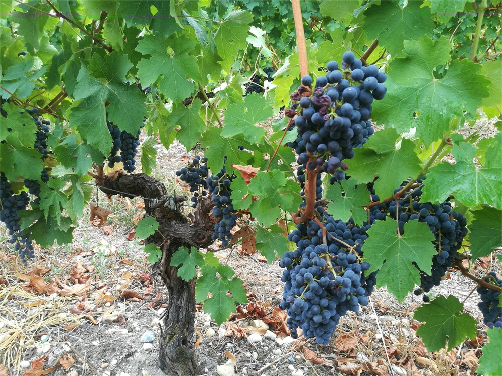 投资法国葡萄酒生意能不能赚钱