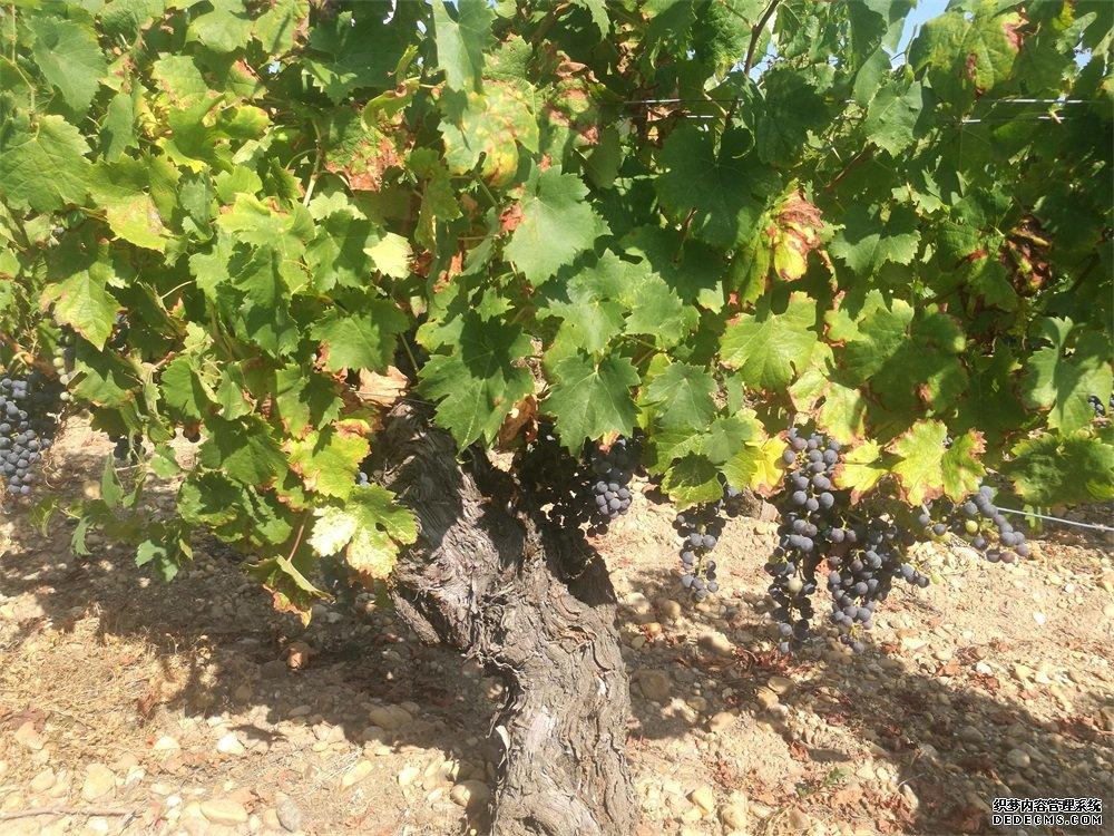 进口葡萄酒加盟生意的利润如何