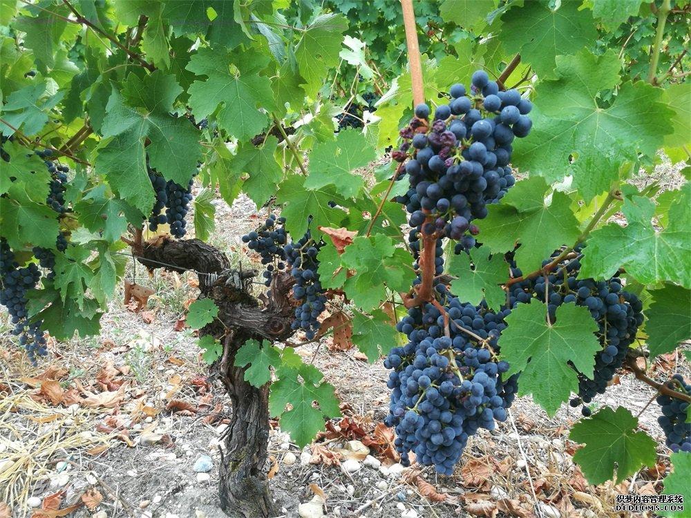进口葡萄酒批发生意有没有市场呢